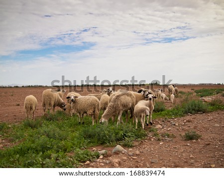 A flock of sheep standing on the grass against the sky - stock photo
