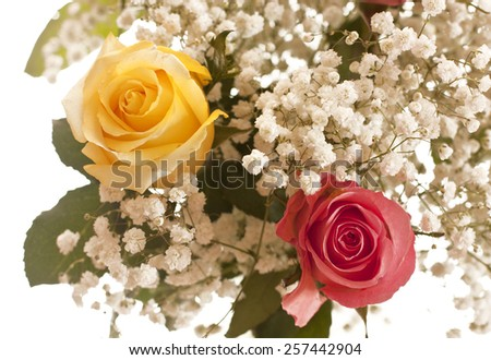 A flower background with a yellow rose and a pink rose in the front and more blurred white flowers at the back - stock photo