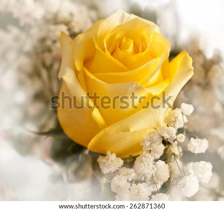 A flower background with a yellow rose in the front and more blurred flowers at the back - stock photo