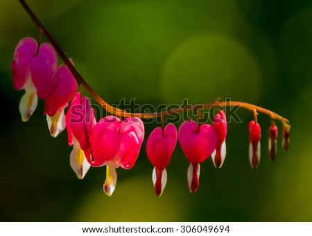 A flower garden is any garden where flowers are grown for decorative purposes - stock photo