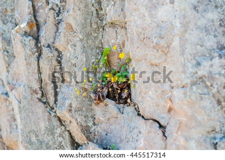 A flower sprouted up through the rock