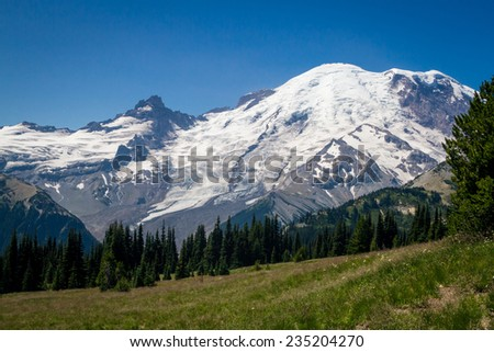 A flowering mountain meadow surrounded by pine forest, with Mount Rainier in the background - stock photo