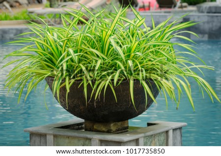 Jardiniere Stock Images, Royalty-Free Images & Vectors | Shutterstock