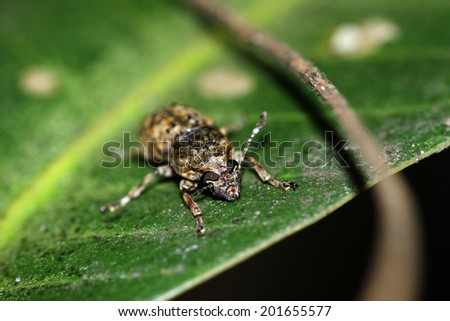 A fly insect on leaf
