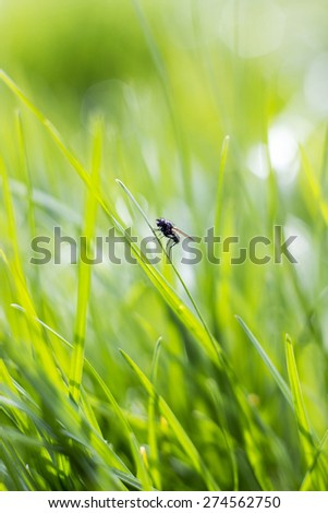 a fly on a green grass - stock photo