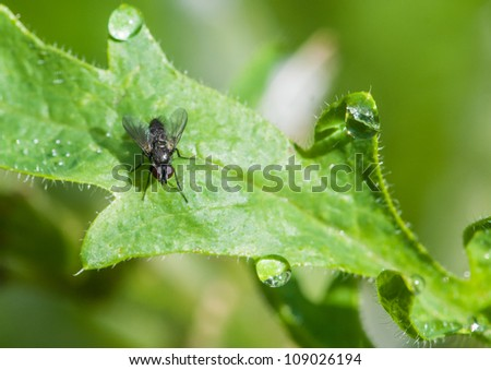 A fly sits on a leaf in the sunshine.