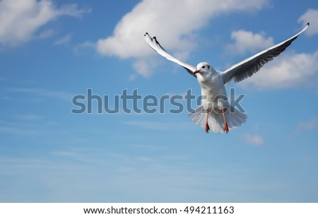 A flying seagull with wings spread wide, which looks like standing in the air