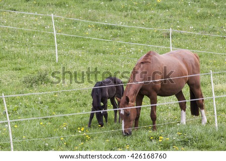 A foal and mare in the pasture