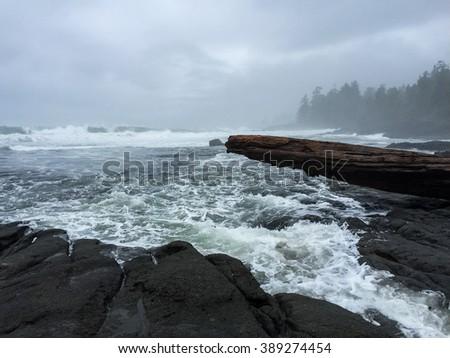 A Foggy Day along the Juan de Fuca Trail near Port Renfrew, British Columbia - stock photo