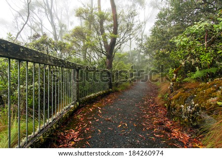 a foggy day at Point Lookout in New England National Park, NSW, Australia - stock photo