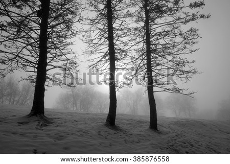 A foggy day in the park - stock photo
