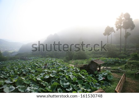 A foggy field of lush greens right outside of a deep forest. - stock photo