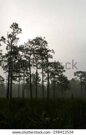A foggy forest at dawn.  Jay B. Starkey Wilderness Park, New Port Richey, FL, USA. - stock photo