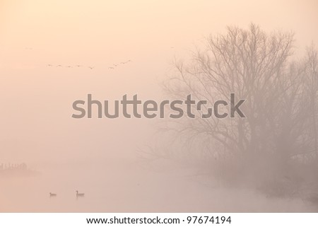 A foggy morning in a typically Dutch landscape - stock photo