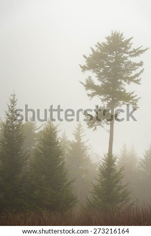 A foggy morning in the Blue Ridge Mountains of North Carolina.  - stock photo