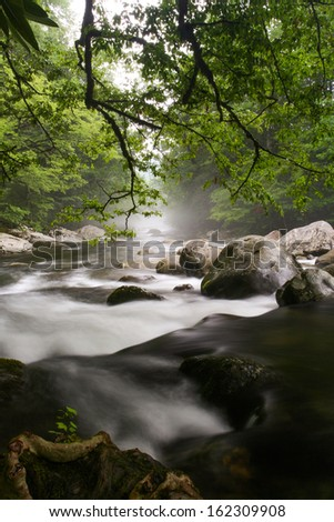 A foggy river through a forest.  Greenbrier, Great Smoky Mountains National Park, TN, USA.