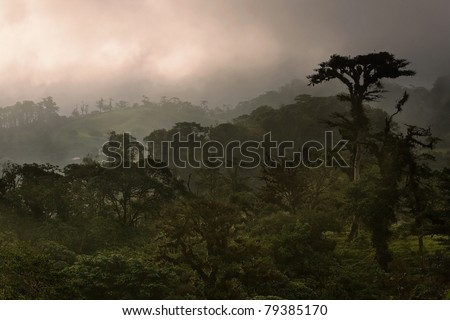 A foggy sunset in a Costa Rican cloud forest - stock photo