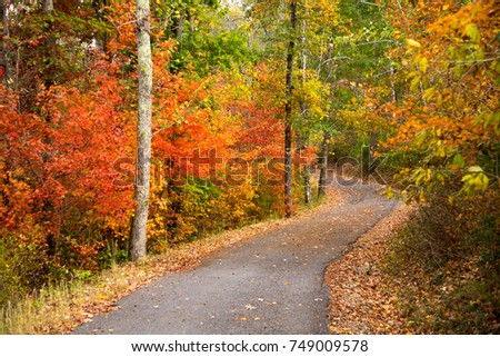 a footpath winding through a hardwood forest in the fall season, near Chattanooga, Tennessee