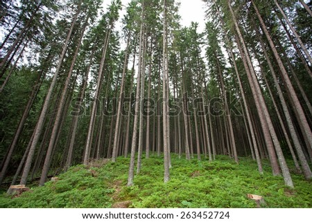 A forest at Tatry mountains, Poland - stock photo