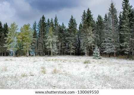 A forest covered in snow in New Mexico - stock photo