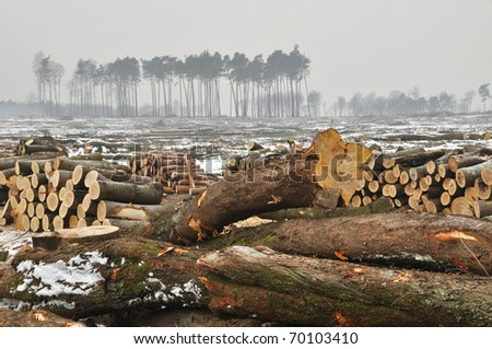 A forest cut down during winter. - stock photo