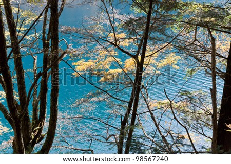 A forest in front of blue lake - stock photo