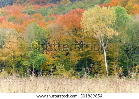 A forest in the fall time.