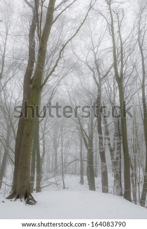 A forest in winter fog - stock photo