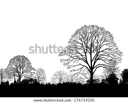 A Forest Landscape with Trees and Sunset, Sunrise - stock photo