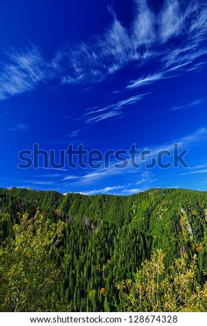A forest of green trees and a bright blue sky with white clouds