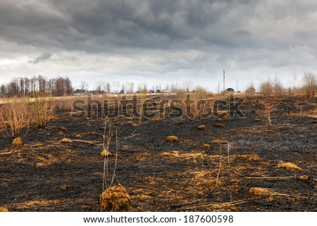 A forrest after a bushfire - stock photo