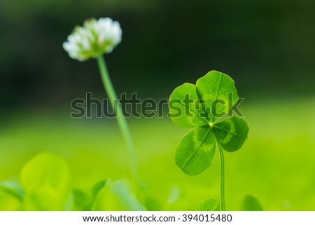 A four leaves clover