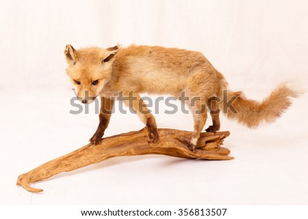 a fox on a piece of wood in the studio