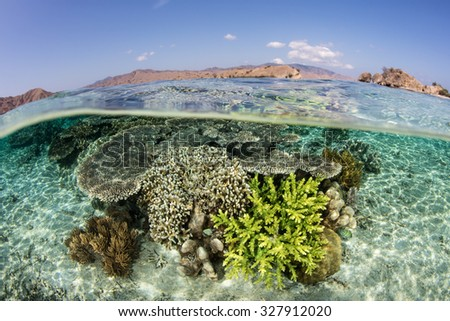 A fragile coral reef grows on a coral reef in Komodo National Park, Indonesia. This region is known for its marine biodiversity and is a popular destination for divers and snorkelers. - stock photo