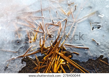 a fragment of a frosted rod - stock photo