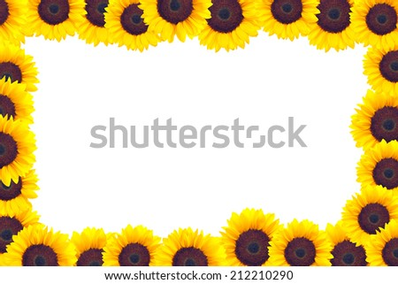 A frame made of sunflower heads  - stock photo
