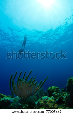 A free diver ascends from a tropical reef in Utila,  Honduras