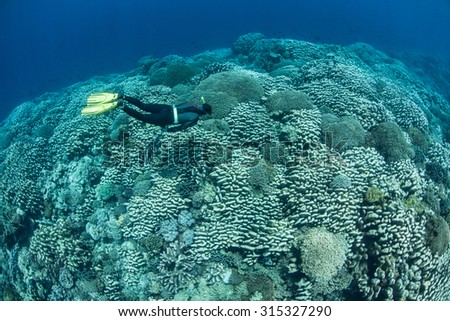 A free diver explores a healthy coral reef growing near the island of Banda in Indonesia. Banda is famous as one of the Spice Islands but is now better known for its spectacular marine life. - stock photo