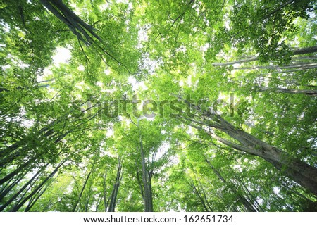 A fresh green beech forest