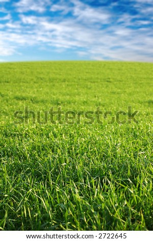 A fresh green field on a bright day