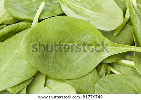 A fresh green spinach leaf isolated against a white background