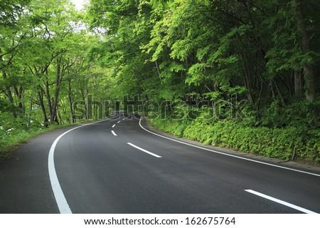 A fresh green way - stock photo