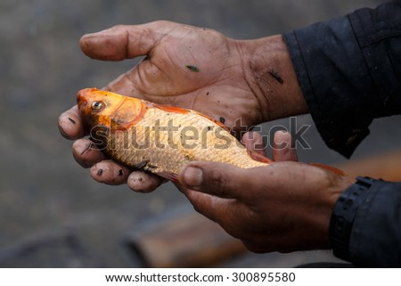 A freshly caught freshwater fish in Chin Stae, Myanmar (Burma) - stock photo