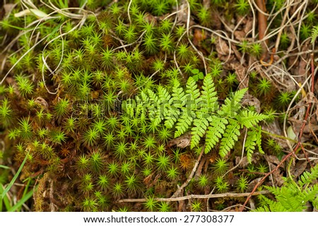 A freshly grown fern lays on the forest floor as Spring unfolds in the North Carolina woods.