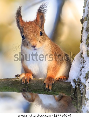 A friend in the forest - squirrel. - stock photo