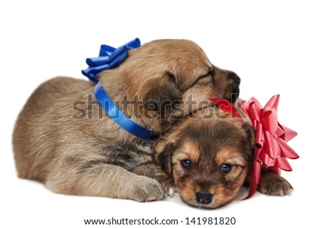 A friendly puppy lie together and one looking into camera isolated on white. - stock photo
