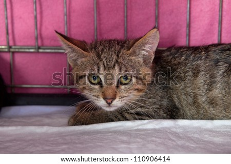 A frightened kitten with green eyes staring out from a cage in a shelter - stock photo