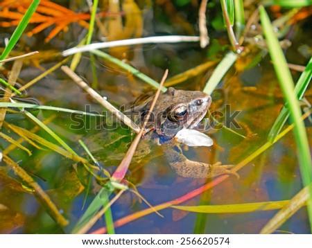 A frog in the water.  - stock photo