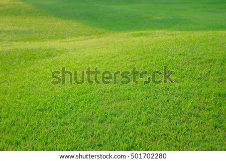 a front selective focus picture of green grass yard in the morning sunrise