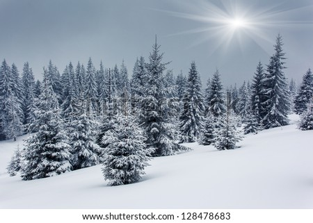 A frosty and sunny day is in mountains. Carpathian, Ukraine.